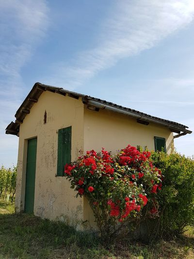 Flower House Built Structure Architecture Building Exterior No People Outdoors Front Or Back Yard Plant Day Sky Nature Beauty In Nature Rose Bush Red Roses Rural Building Nebbiolovineyards Vineyards  Piedmont Italy Travel Destinations Freshness