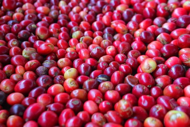 Full frame shot cranberries for sale at market
