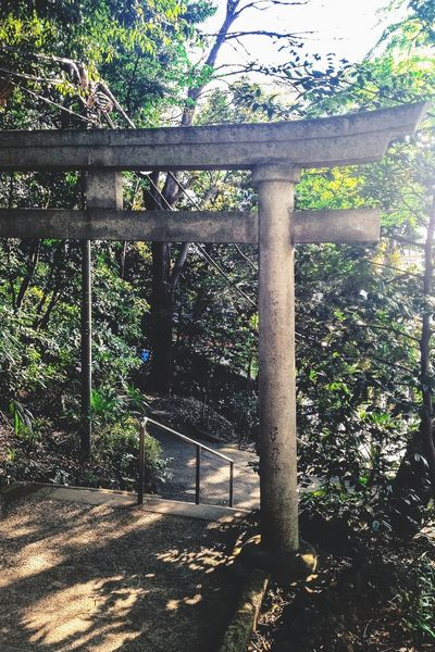 """Torii"" Entrance gate of Shinto shrine Places Shrine Street Asian Culture Japanese  Trees Light And Shadow Nature Japanese Culture More Than 100 Like"