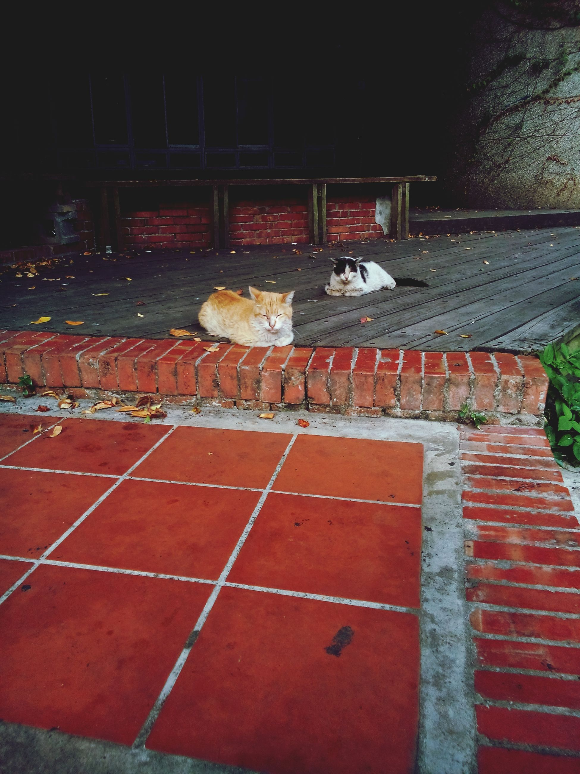 animal themes, built structure, building exterior, domestic animals, architecture, one animal, mammal, outdoors, no people, night, pets, dog, red, house, street, bird, relaxation, full length, brick wall