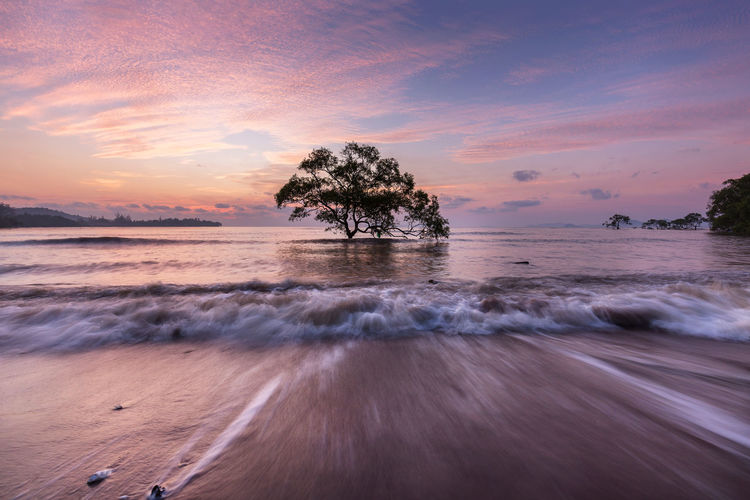 a straight tree in the sea Sunset Sky Beauty In Nature Tree Scenics - Nature Water Cloud - Sky Land Motion Sea Tranquility Nature No People Plant Beach Orange Color Tranquil Scene Horizon Over Water Idyllic Outdoors Lonely Wave Long Exposure Twilight Movement Sunrise Time Decoration Center Point Of View Space Spring Summer Holiday Travel Tropical Tree Paradise Peaceful Seascape Landscape Art Of Nature Krabi Thailand Amazing Pattern Beautiful Nature Remembrance Straight Low Angle View Morning Light Stories