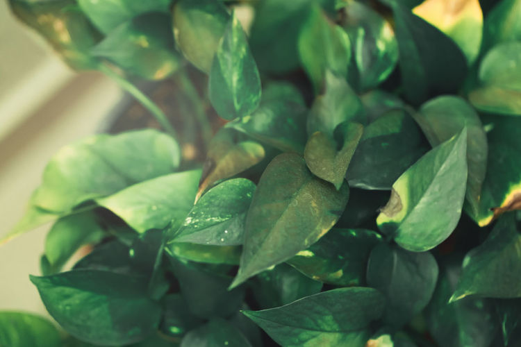 Close-up of green leaves