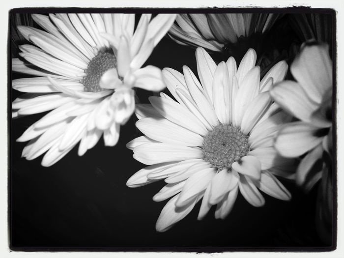 April flowers 5 KimberlyJTilley