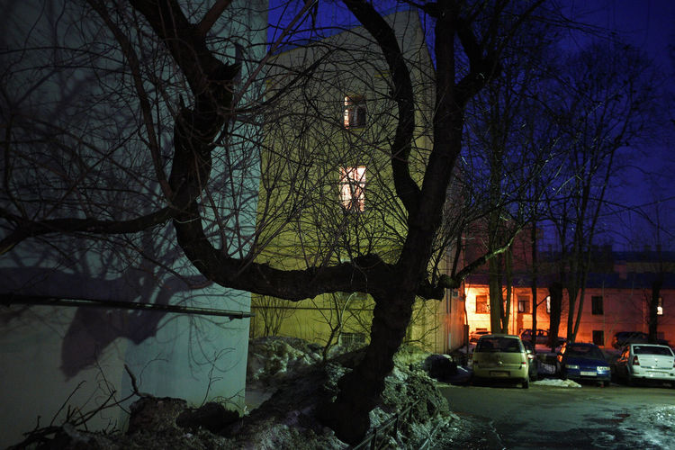Bare trees by illuminated building during winter at night