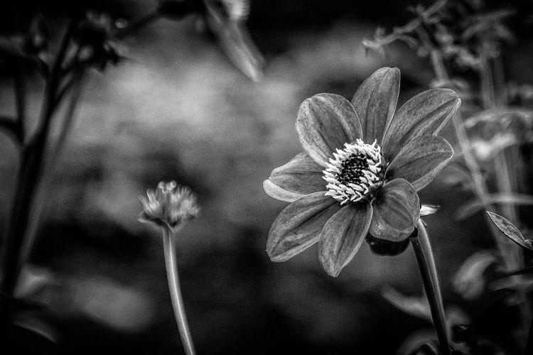 Gardens EyeEm Best Shots The Week On Eyem Showcase: March LongwoodGardens Flowers Flower Blackandwhite Black And White Black & White