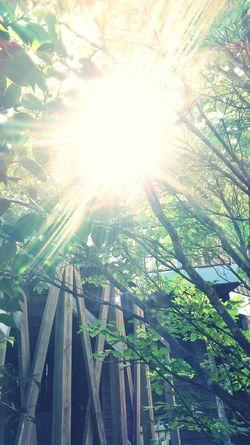 Taking Photos Relaxing Green Green Green!  Morning Light Green Leaves Oita,japan