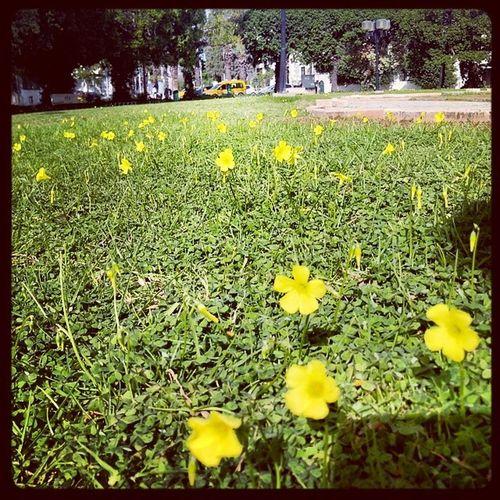 الازهار في الحقوب