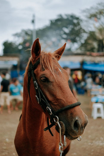 Close-up of a horse in ranch