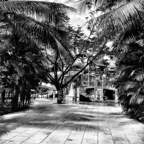B&W Collection Blackandwhite EyeEmBestPics TakeoverContrast Tree Outdoors No People Day Palm Tree Nature Architecture Illuminated Monochrome EyeEm Gallery Take Over Contrast No People, Swimming Park Ilumination Full Frame