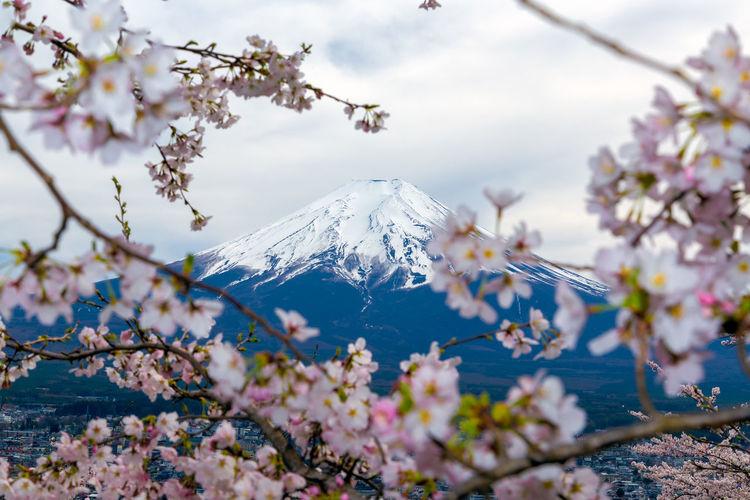 Mount Fuji and