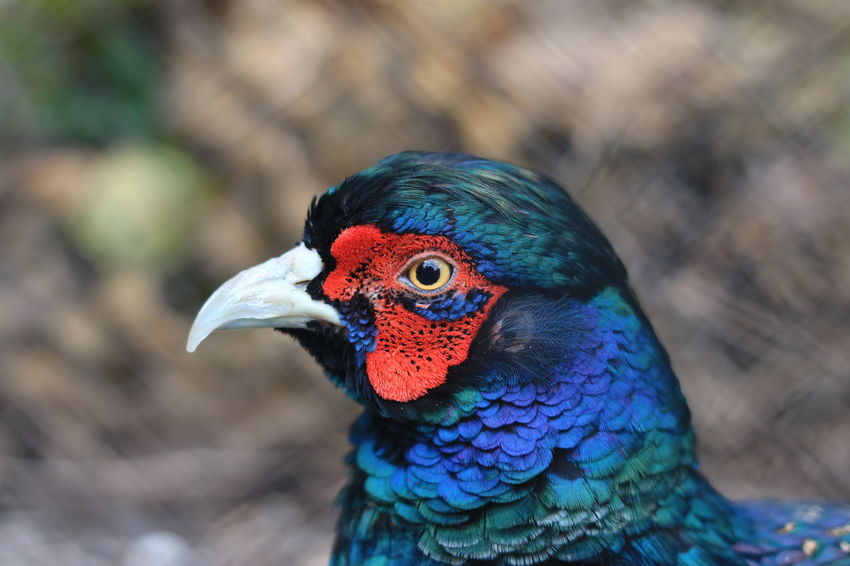 the bird eye Red Red Bird Animal Themes Animal Wildlife Animals In The Wild Beauty In Nature Bird Close-up Day Focus On Foreground Multi Colored Nature One Animal Outdoors Rainbow Lorikeet