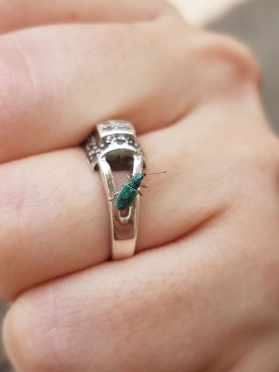 Close-up of insect on ring