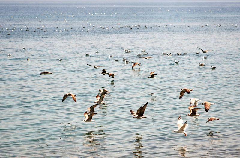 Birds swimming in sea