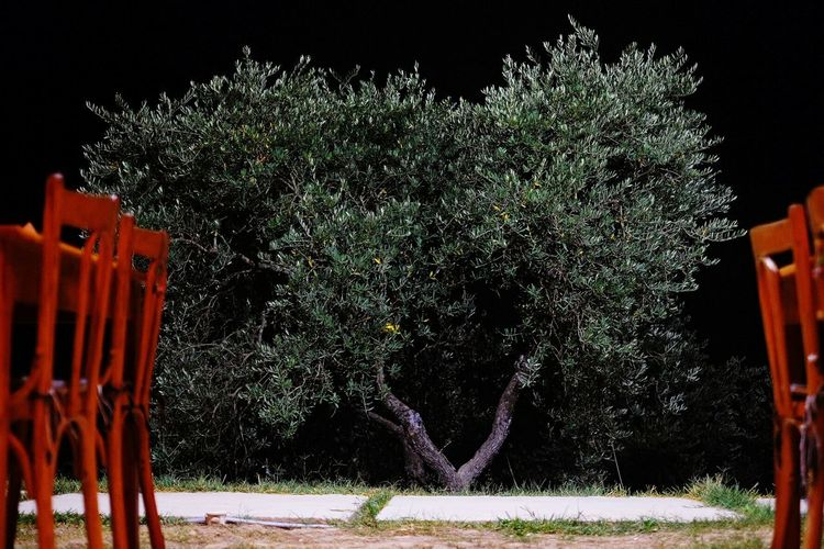 Night Tree Chairs Lebanon Middle East Restaurant View Night View Nature TakeoverContrast