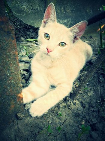 Playtime. My Little Cat☺ Cute♡ Animal Home Cat♡ Home Sweet Home