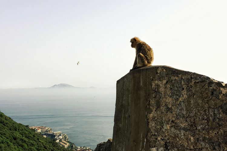 Where two continents meet Gibraltar Africa Europe Connected With Nature Connection Continent Continents Monkey Sitting Alone Observing Nature Photography Majestic Majestic Nature