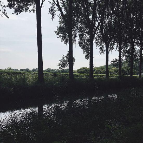 Damme Belgie Belgium Outdoor Photography Strolling Around Summer