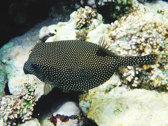 Underwater UnderSea Beauty In Nature La Digue Contrastes Naturales Pet Portraits