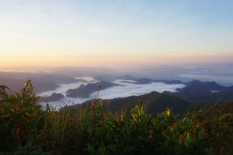 Hanging Out Relaxing Beautiful Beauty In Nature Nature Mountain Clound Foggy Morning Sky Pastel Colors Forest Landscape Thailand