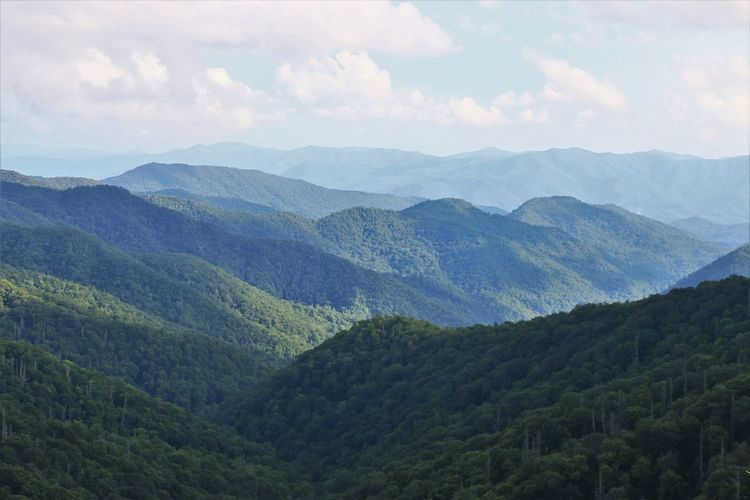Mountain Scenics - Nature Beauty In Nature Tranquil Scene Tranquility Sky Landscape Environment Tree Non-urban Scene Nature Plant Land No People Day Forest Outdoors Great Smokey Mountain National Park