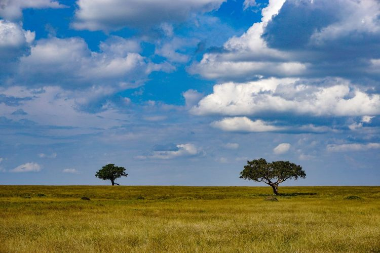 Clouds over the African game reserve. Cloud - Sky Environment Sky Plant Landscape Land Field Grass Beauty In Nature Nature Tranquil Scene No People Day Tree Tranquility Horizon Over Land Scenics - Nature Non-urban Scene Horizon Outdoors Semi-arid