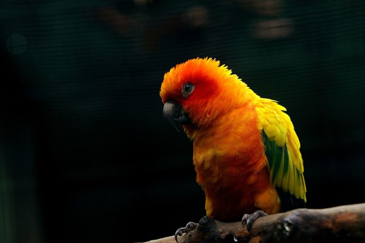 Close-up of parrot perching on a branch
