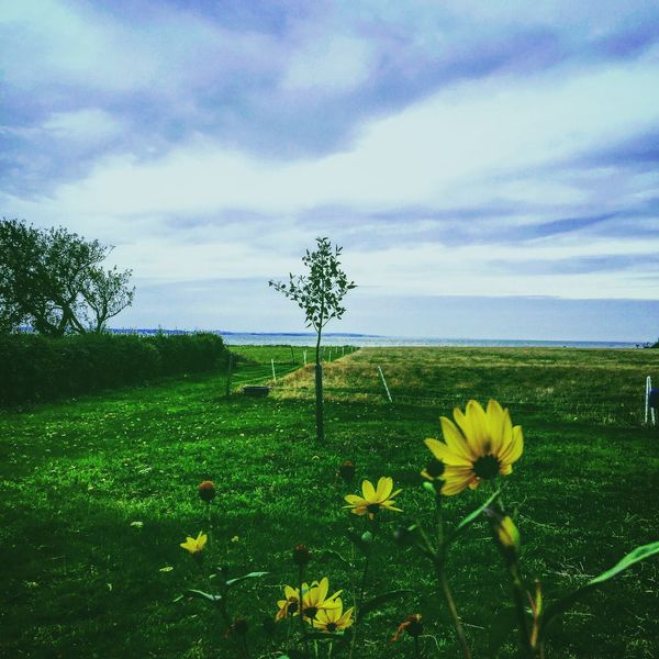 Flower Growth Tranquil Scene Beauty In Nature Sky Freshness Fragility Tranquility Water Stem Plant Cloud Tree Nature Scenics Field Petal Yellow Green Color Flower Head