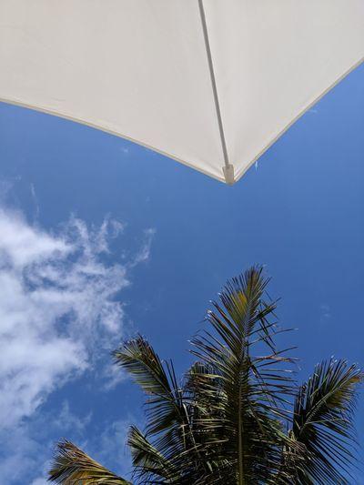 Tree Palm Tree Blue Sky Cloud - Sky