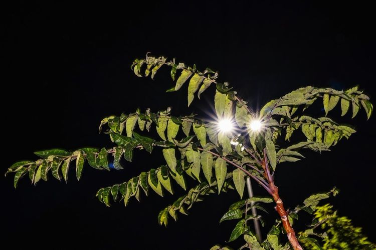 Low angle view of illuminated plant against sky at night