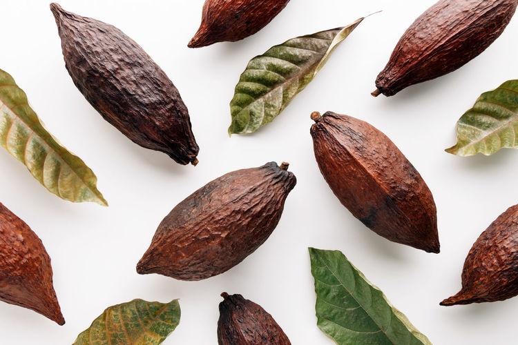 Cacao fruits on white background