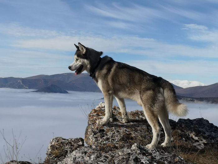 Side view of dog standing on rock against sky