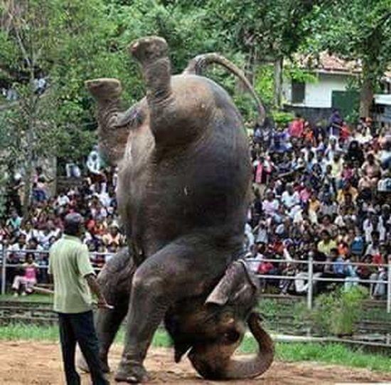 Elephant Parade Wildlife Large Group Of People