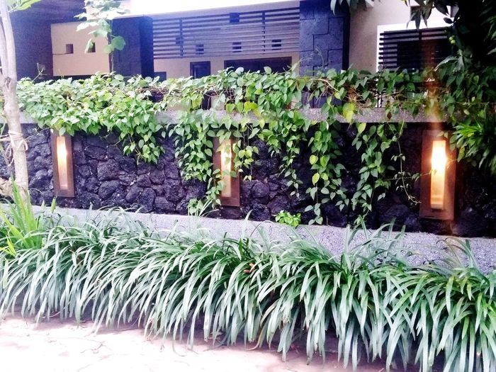 exterior home Hedge Hedge Beautiful Water Close-up Architecture Plant
