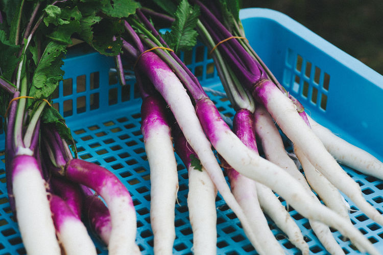 Close-Up Of Radish In Container