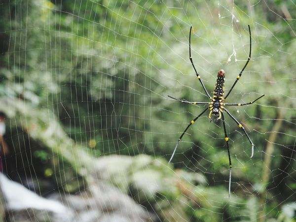 Spider and the web Beauty In Nature Spider Jungle Forest Forest Photography Animal Wildlife Insect Animal Leg Outdoors Close-up No People Nature Day