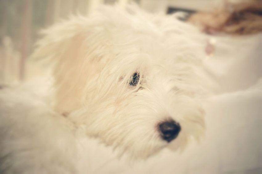 Home Dog❤ Dog Photography Nikon D3100 Hello World Bit
