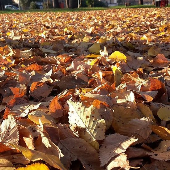 Field of leaves .......as they slowly fall on the ground..... you can feel the the cold increasing each day. Winter SundayFunday Fallenleaves