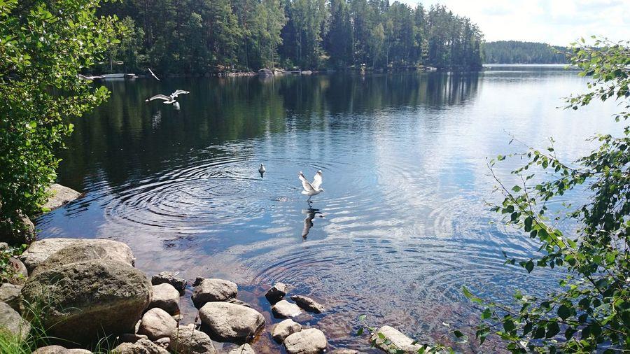 Water Bird Lake Nautical Vessel Swimming Men Reflection Floating On Water Sky Duck