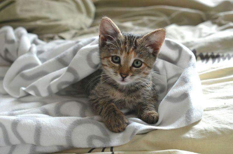 Cat Cats Cat♡ Kitty Kitten 😚 😚