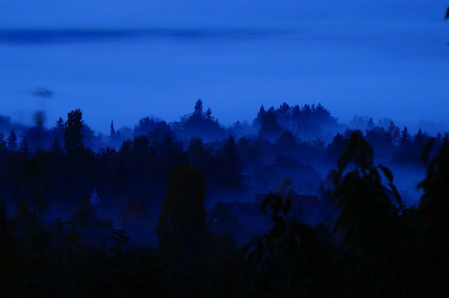 Gardens in the fog below Twilight Beauty In Nature Fog Forest Gardens Growth Landscape Nature Night No People Outdoors Pilis Pilisszántó Scenics Silhouette Sky Tranquil Scene Tranquility Tree