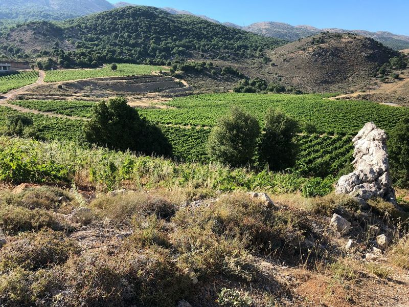 Qanafar Winery Bekaa Valley Winery Plant Land Nature Tranquility Environment Scenics - Nature Tranquil Scene No People Tranquility