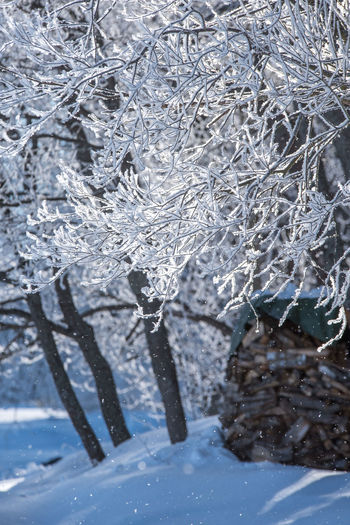 Beauty In Nature Blizzard Branch Close-up Cold Temperature Covering Day Environment Extreme Weather Focus On Foreground Frozen Ice Icicle Nature No People Outdoors Plant Snow Snowing Tranquility Tree White Color Winter