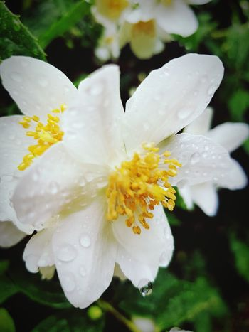 Flower Nature Plant Close-up Water Flower Head Beauty In Nature No People Petal Fragility Day Outdoors Freshness