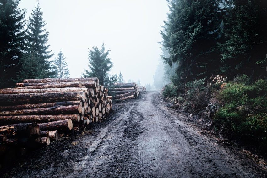 Tree Plant Log Forest Timber Direction The Way Forward Nature Firewood Deforestation Wood Stack Day Land Road Lumber Industry Wood - Material Sky Fog No People Outdoors Woodpile