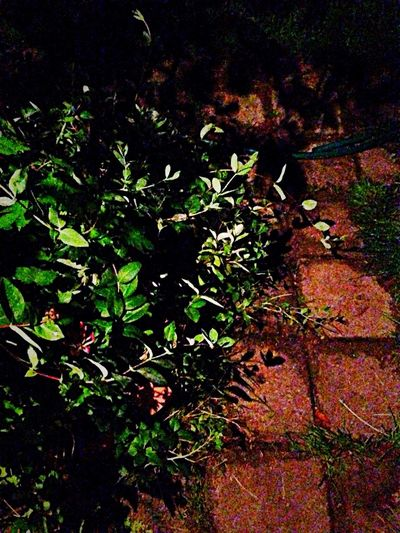 Road Night Garden Stones