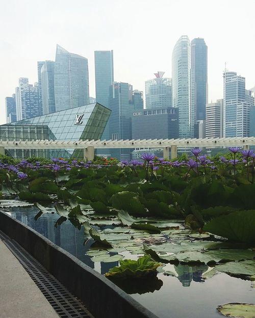 City view Singapore... Landscape Urbanphotography Beautiful Place Architecture City View  Lotus Flower