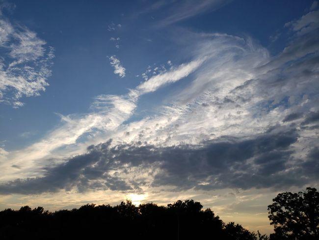 Tree Blue Pinaceae Silhouette Pine Tree Sunset Sky Cloud - Sky