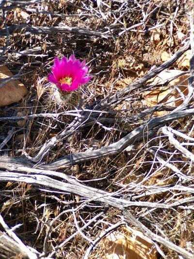 Raytheon Plant Flower Flowering Plant Nature Fragility Vulnerability  Day