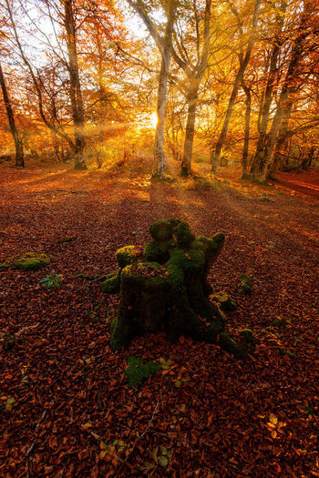 Sunlight falling on autumn leaves in forest