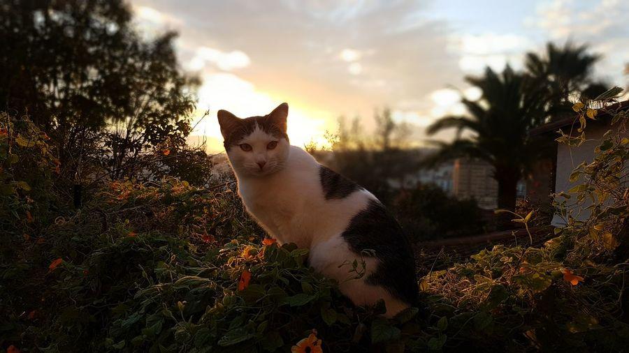 chat cat coucher soleil EyeEmNewHere